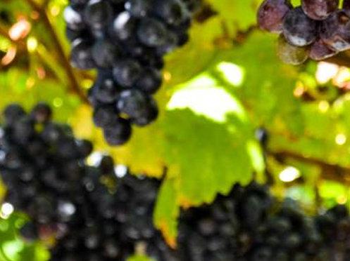 Längster Verkostungstresen Italiens für autochthone Weine